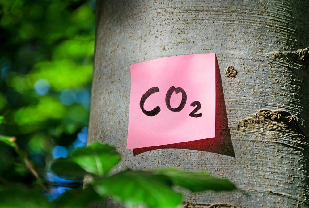 MTP, inmersa en el proceso de certificación 'Calculo, reduzco y compenso' la huella de CO2, consigue los primeros sellos